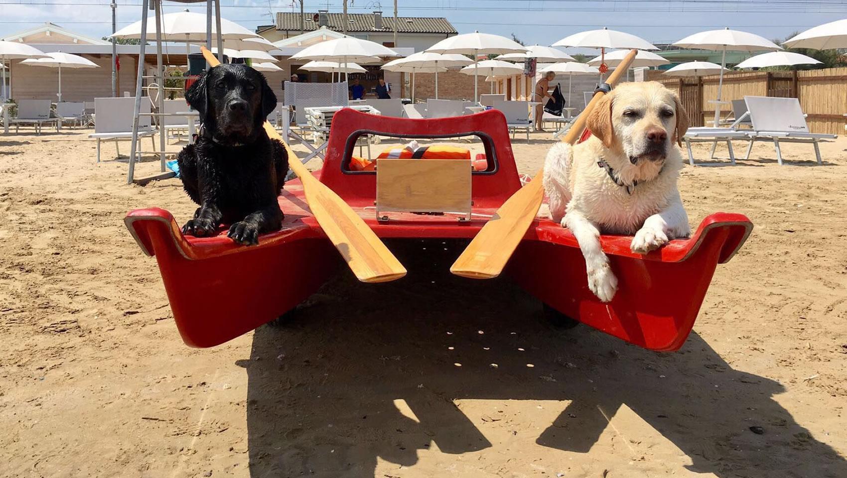 spiaggia cani fano animalido
