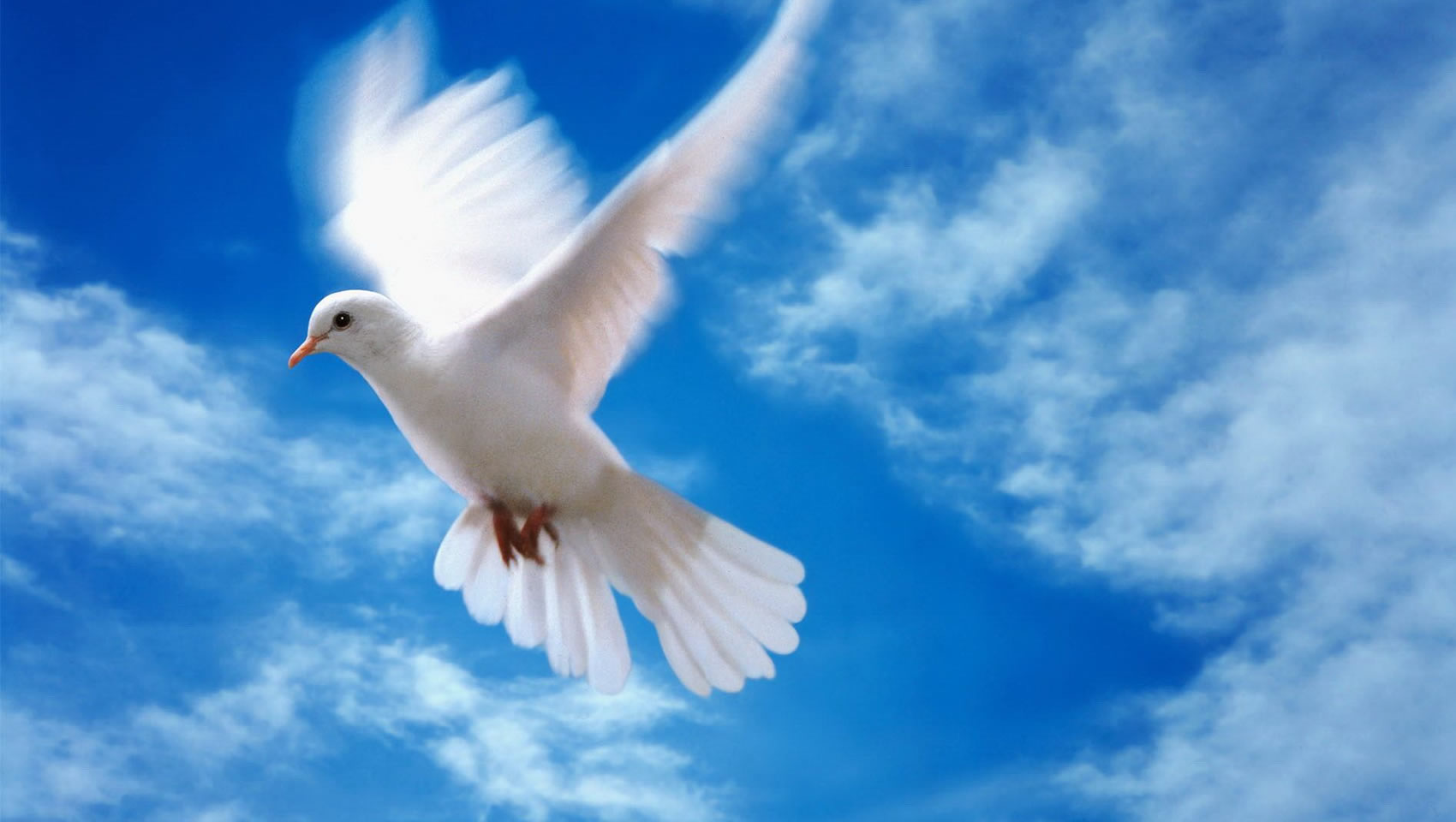 Pentecoste colomba fano