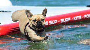 spiaggia per cani